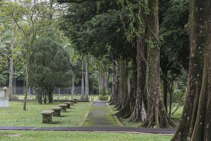 Trouble in Taman Rimba: The Plot