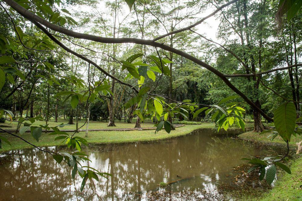 Taman Rimba Kiara. Photo: The Malaysian Insight